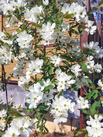 お花見日和_f0045132_13052722.jpg