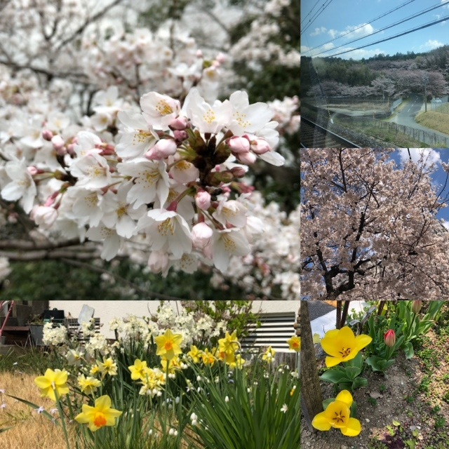 春 *_c0131839_14452739.jpeg