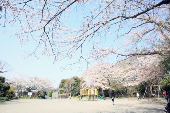 外出レク ~ 2019 お花見週間♪③ ~_e0222340_161436.jpg