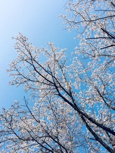 4月ー桜の季節ー_f0206741_21074427.jpeg