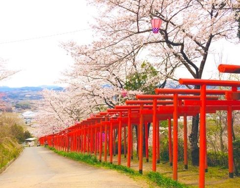 4月ー桜の季節ー_f0206741_21133503.jpeg