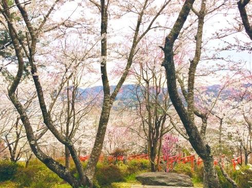 4月ー桜の季節ー_f0206741_21140074.jpeg