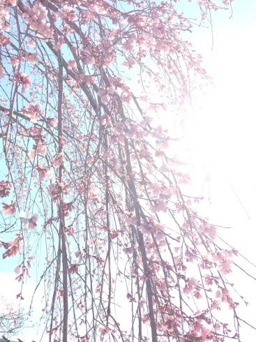 4月ー桜の季節ー_f0206741_21163836.jpeg
