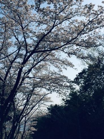4月ー桜の季節ー_f0206741_21185322.jpeg