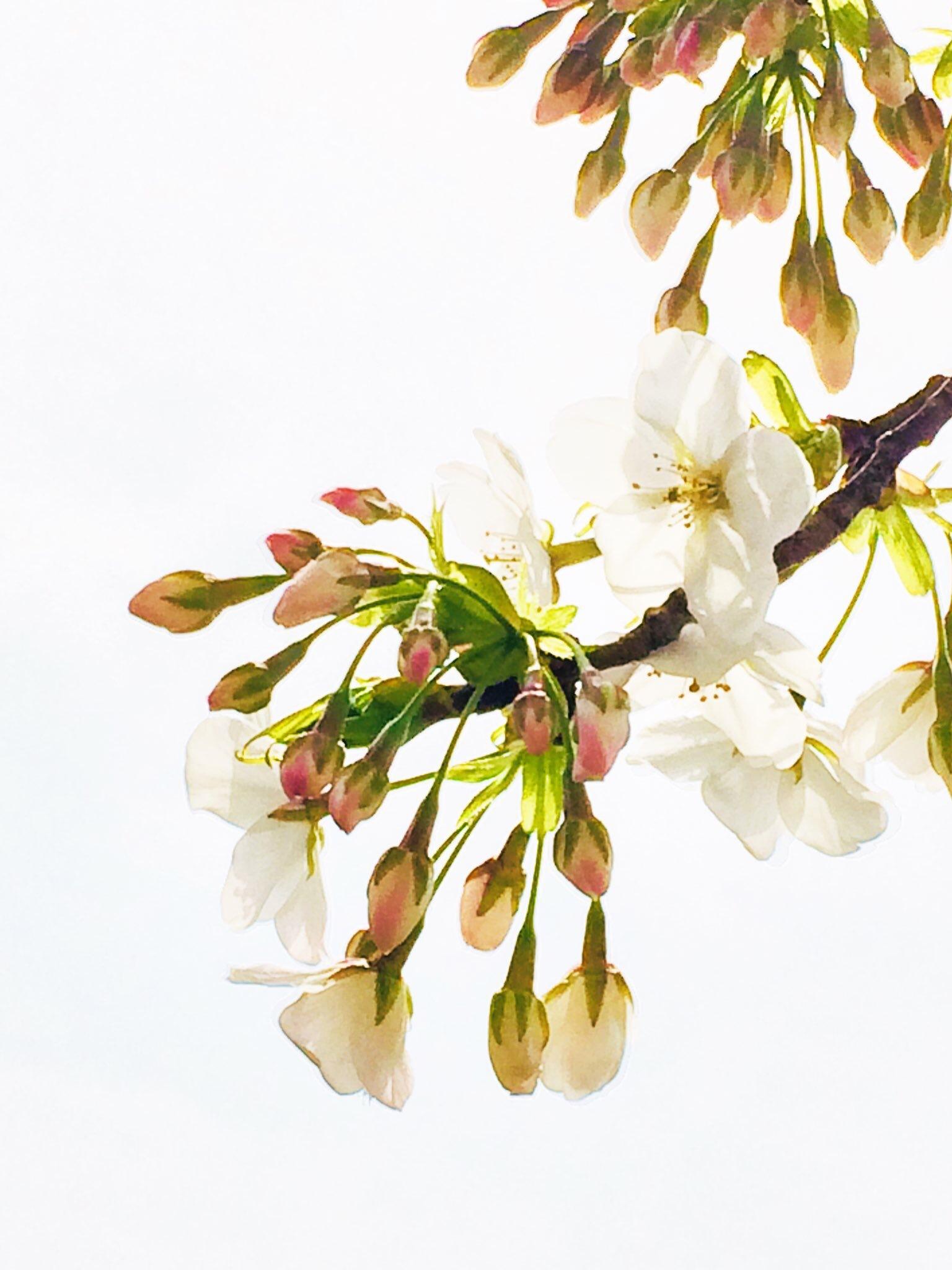 4月ー桜の季節ー_f0206741_21195804.jpeg