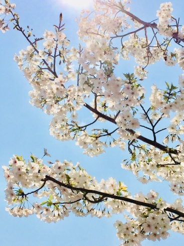 4月ー桜の季節ー_f0206741_21230248.jpeg