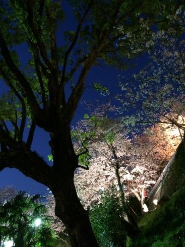 4月ー桜の季節ー_f0206741_21260016.jpeg