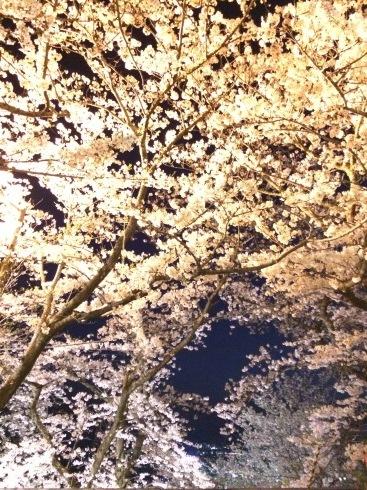 4月ー桜の季節ー_f0206741_21280342.jpeg