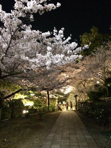 4月ー桜の季節ー_f0206741_21282982.jpeg