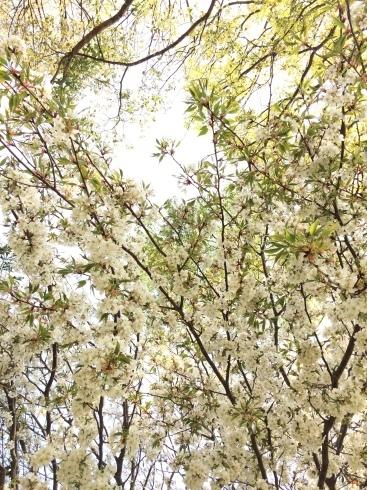 4月ー桜の季節ー_f0206741_21411831.jpeg
