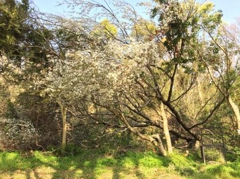 4月ー桜の季節ー_f0206741_21434483.jpeg