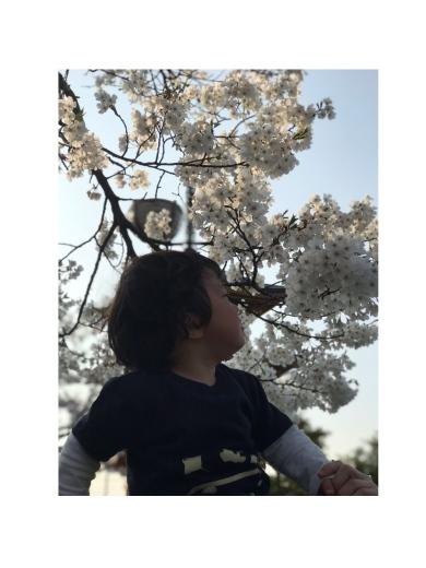 桜、満開_e0179943_23021920.jpeg