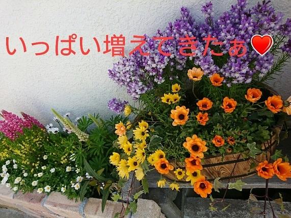 f0128146_23571606.jpg