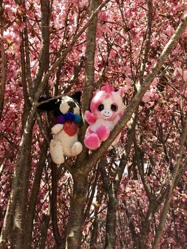 前川幸市さんのフレブルや猿にすっかり魅せられた・・・(温かいんだもん♪)_b0307951_23300916.jpg