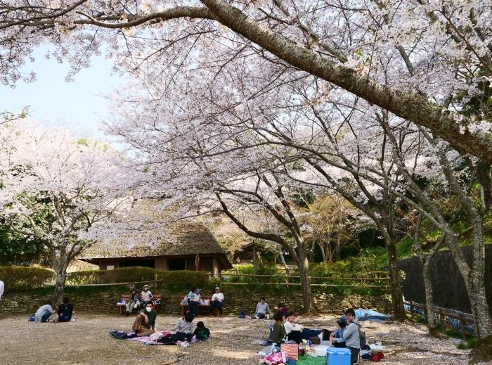 春爛漫の紀伊風土記の丘 1  2019-04-08 00:00   _b0093754_22305121.jpg