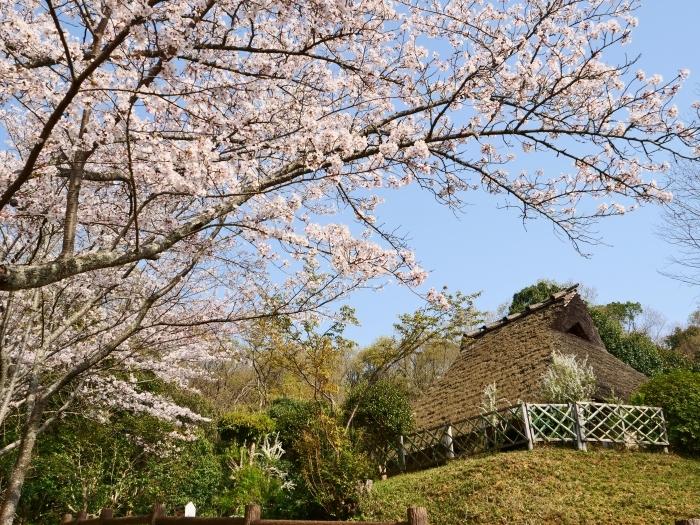 春爛漫の紀伊風土記の丘 1  2019-04-08 00:00   _b0093754_22315675.jpg