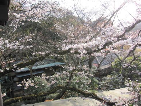 2019年4月6日 桜実況中継_c0078659_17240315.jpg