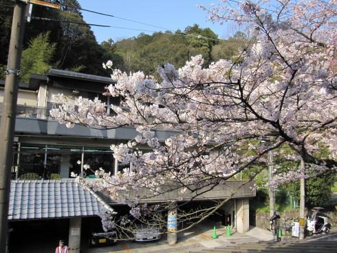 2019年4月6日 桜実況中継_c0078659_17254556.jpg