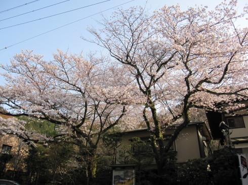 2019年4月6日 桜実況中継_c0078659_17275528.jpg