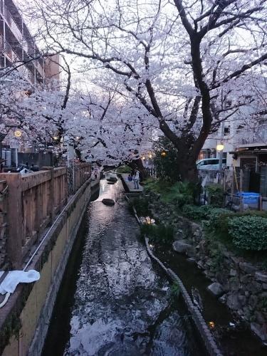 ニケ領用水に桜を見に行ってきた!_c0100865_11302432.jpg