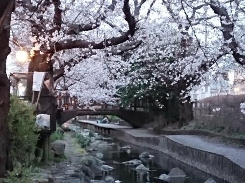 ニケ領用水に桜を見に行ってきた!_c0100865_11311612.jpg