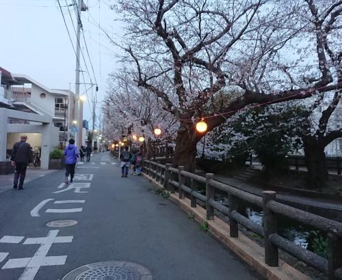 ニケ領用水に桜を見に行ってきた!_c0100865_11322353.jpg