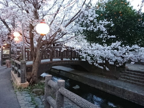 ニケ領用水に桜を見に行ってきた!_c0100865_11323979.jpg