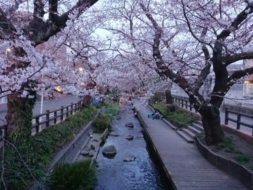 ニケ領用水に桜を見に行ってきた!_c0100865_11325222.jpg