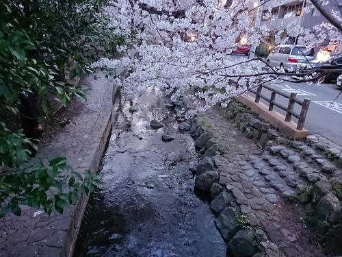 ニケ領用水に桜を見に行ってきた!_c0100865_11330542.jpg