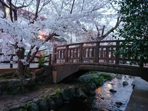 ニケ領用水に桜を見に行ってきた!_c0100865_11343225.jpg