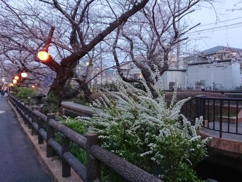 ニケ領用水に桜を見に行ってきた!_c0100865_11344783.jpg