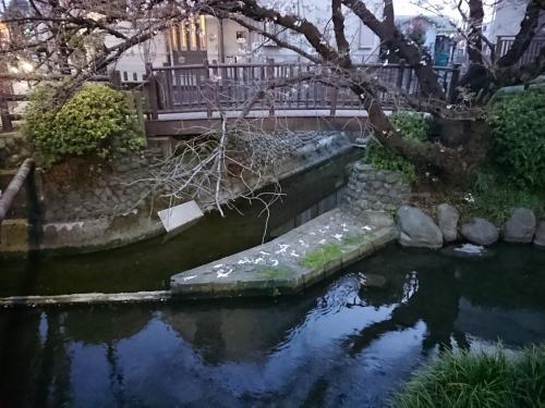 ニケ領用水に桜を見に行ってきた!_c0100865_11354036.jpg