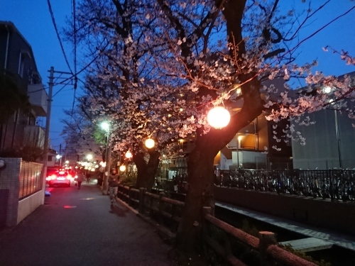 ニケ領用水に桜を見に行ってきた!_c0100865_11363817.jpg