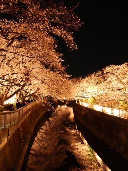 仙川 夜桜_a0351368_21214583.jpg