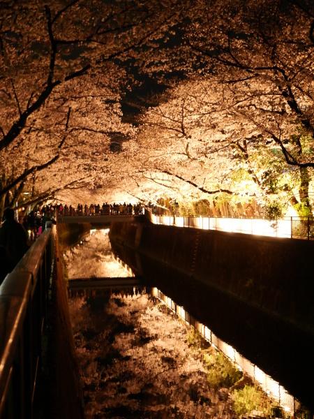 仙川 夜桜_a0351368_21222157.jpg
