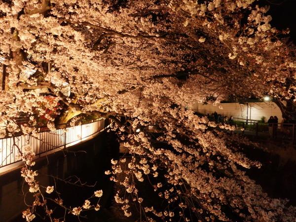 仙川 夜桜_a0351368_21225400.jpg