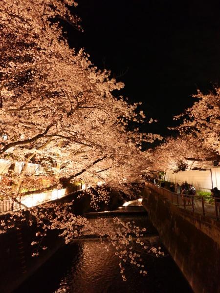 仙川 夜桜_a0351368_21231062.jpg