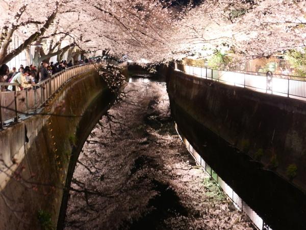 仙川 夜桜_a0351368_21240311.jpg