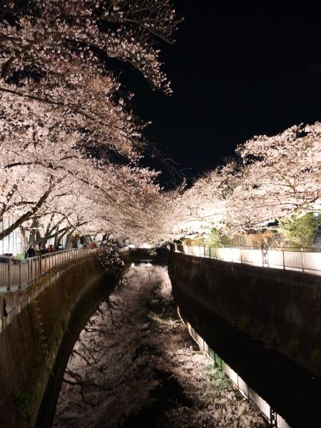 仙川 夜桜_a0351368_21243963.jpg