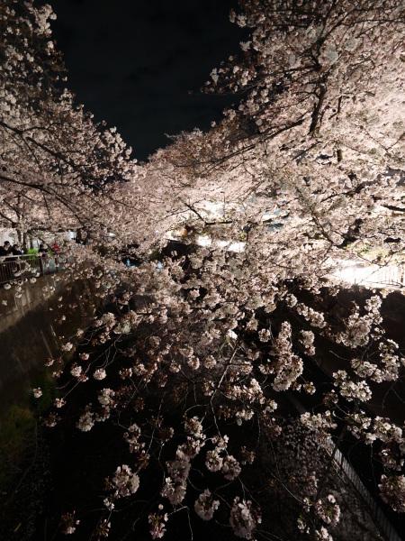 仙川 夜桜_a0351368_21251509.jpg