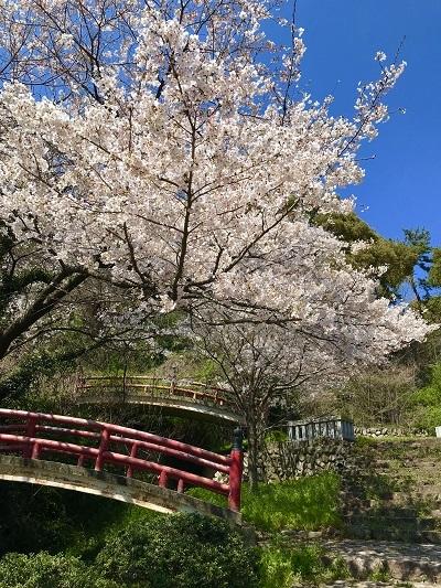 今年の桜は香川より_c0130172_10221981.jpg