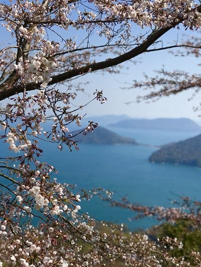 今年の桜は香川より_c0130172_10224359.jpg