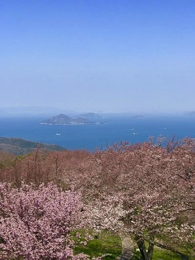 今年の桜は香川より_c0130172_10225174.jpg