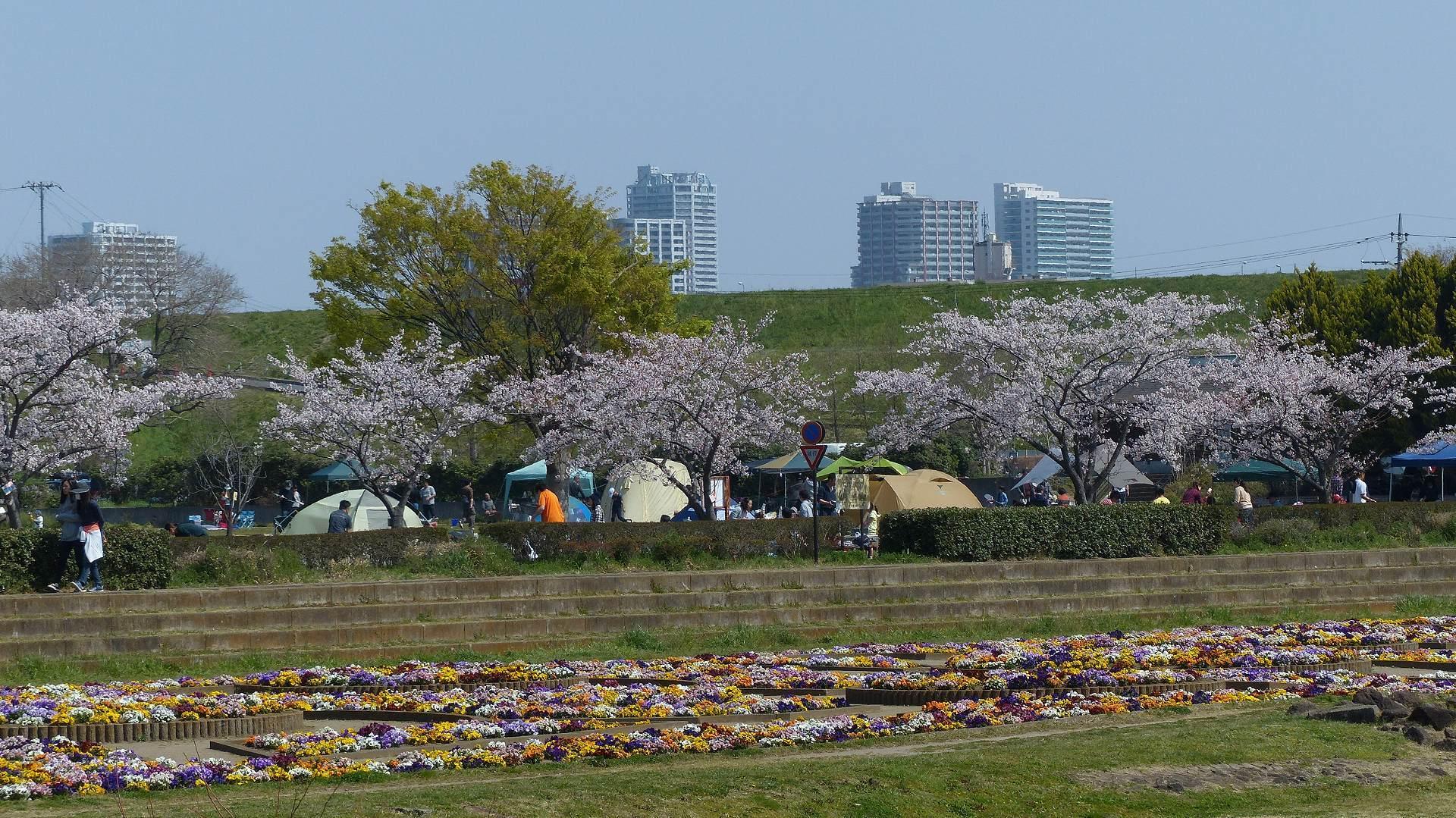 今年の桜はどこか変? 【 2019 4/6(土) 】_a0185081_15254660.jpg