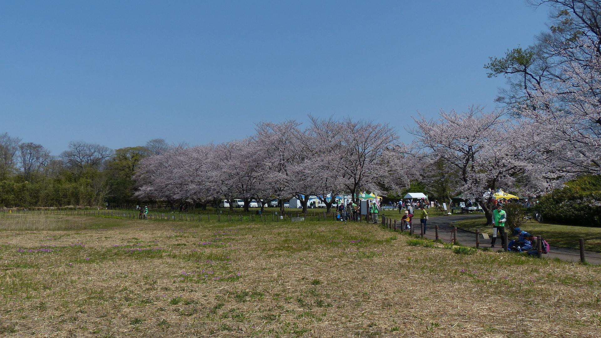 今年の桜はどこか変? 【 2019 4/6(土) 】_a0185081_15412809.jpg