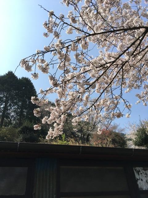 お花見日和_b0183681_11033637.jpeg