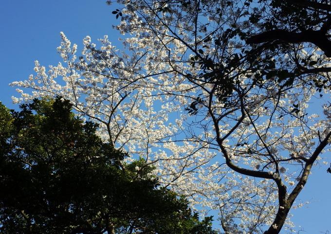 桜咲く伊勢から鳥羽へ~_c0188784_19232705.jpg