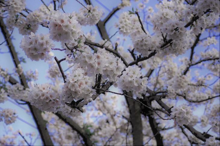 桜も散り始めて・・・_e0305388_13235226.jpg
