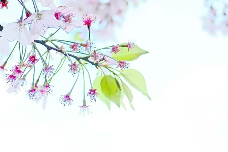 桜も散り始めて・・・_e0305388_13240538.jpg