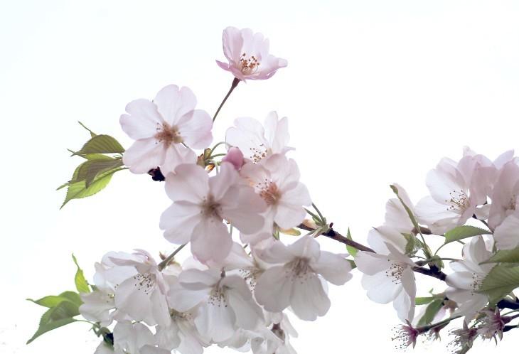 桜も散り始めて・・・_e0305388_13243577.jpg